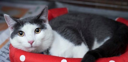 Doot wants you for NSALA's National Shelter Pet Day 2017 images