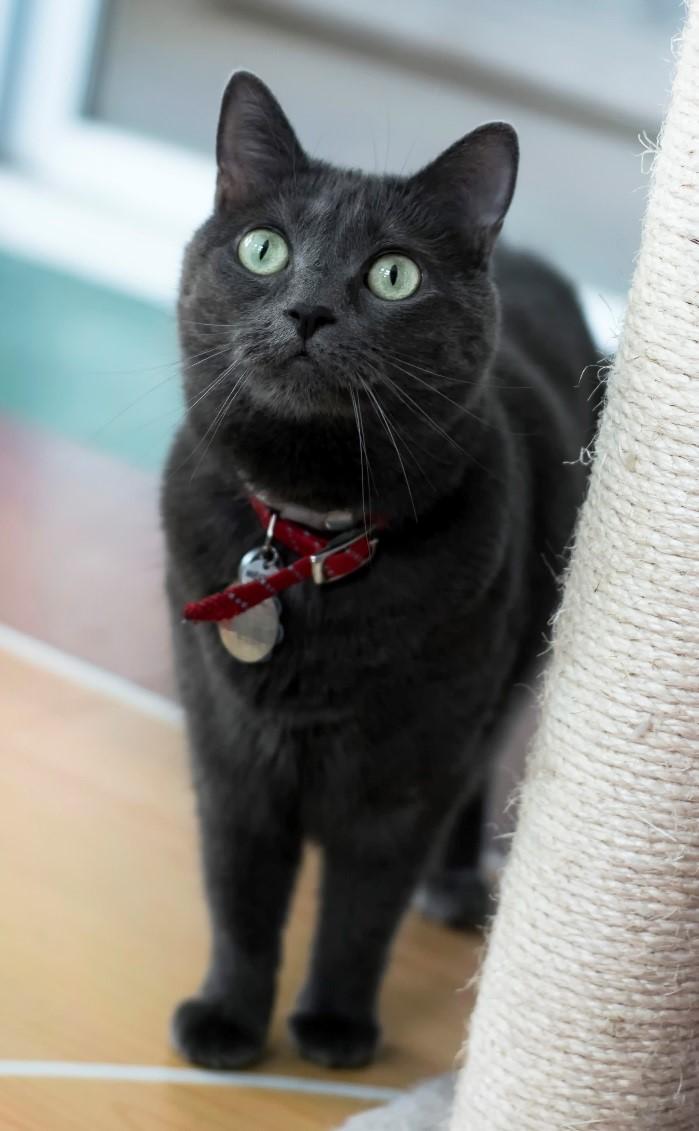 pepper rescue cat adopted movie tv tech geeks