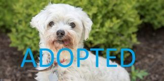 Mrs tyler adopted from nsala movie tv tech geeks maltese dog