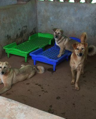 NSALA brings 16 dogs to New York rescued from Yulin Dog Meat Trade Festival 2017