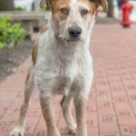 coby rescue dog nasala movie tv tech geeks.com