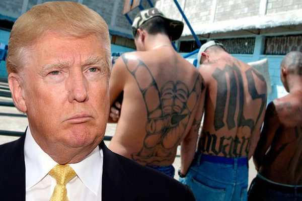donald trump vs ms 13 gang