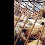 fight yulin dog meat trade festival