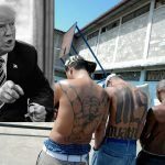 ms 13 gang and donald trumps threat