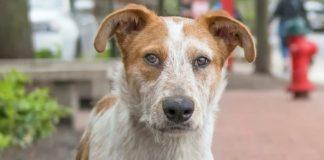 rescue dog of the week coby at nsala ready for good home 2017