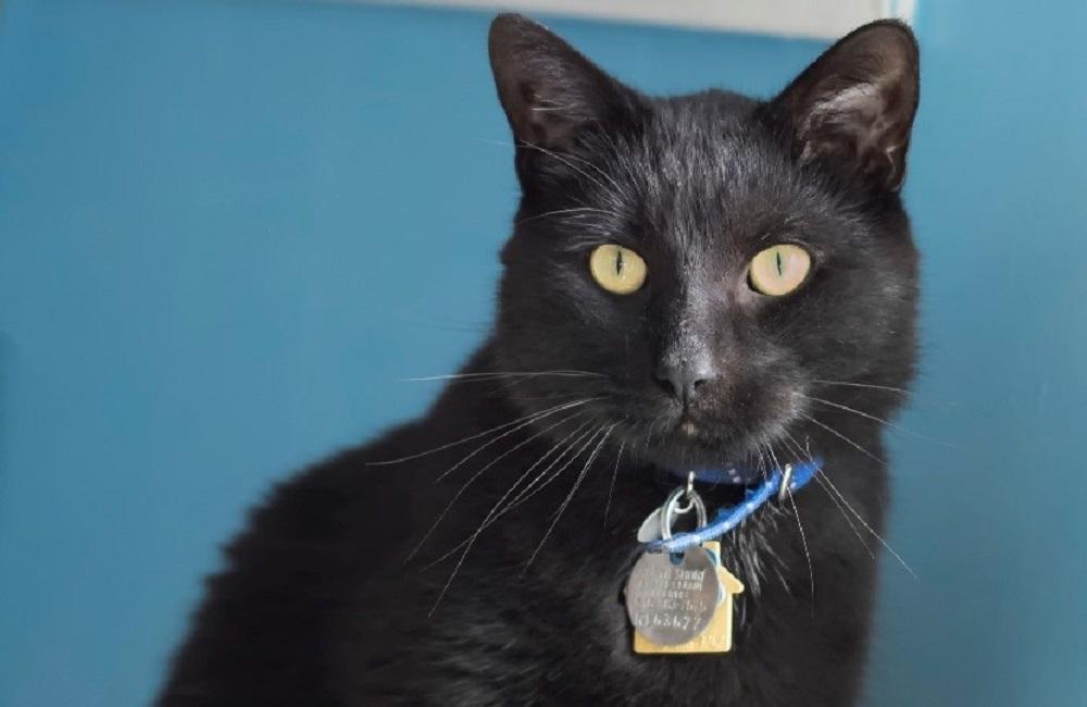 wonder rescue cat adopted nsala movie tv tech geeks