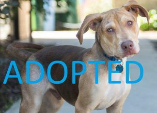 BEAU adopted movie tv tech geeks rescue dog