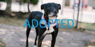 RESCUE dog star adopted nsala movie tv tech geeks border collie