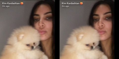kim kardashian with northwest puppy