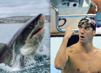 michael phelps taking on shark week great white race