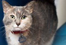this calico coco will add plenty of flavor to a new home 2017 images