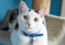 rescue cat jim bob hoping to spread his west virginia love to new home 2017 images