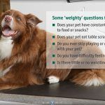 pet weight issues to consider