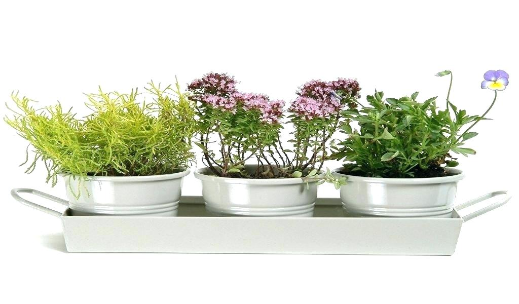 mothers day beautiful herb kit gift