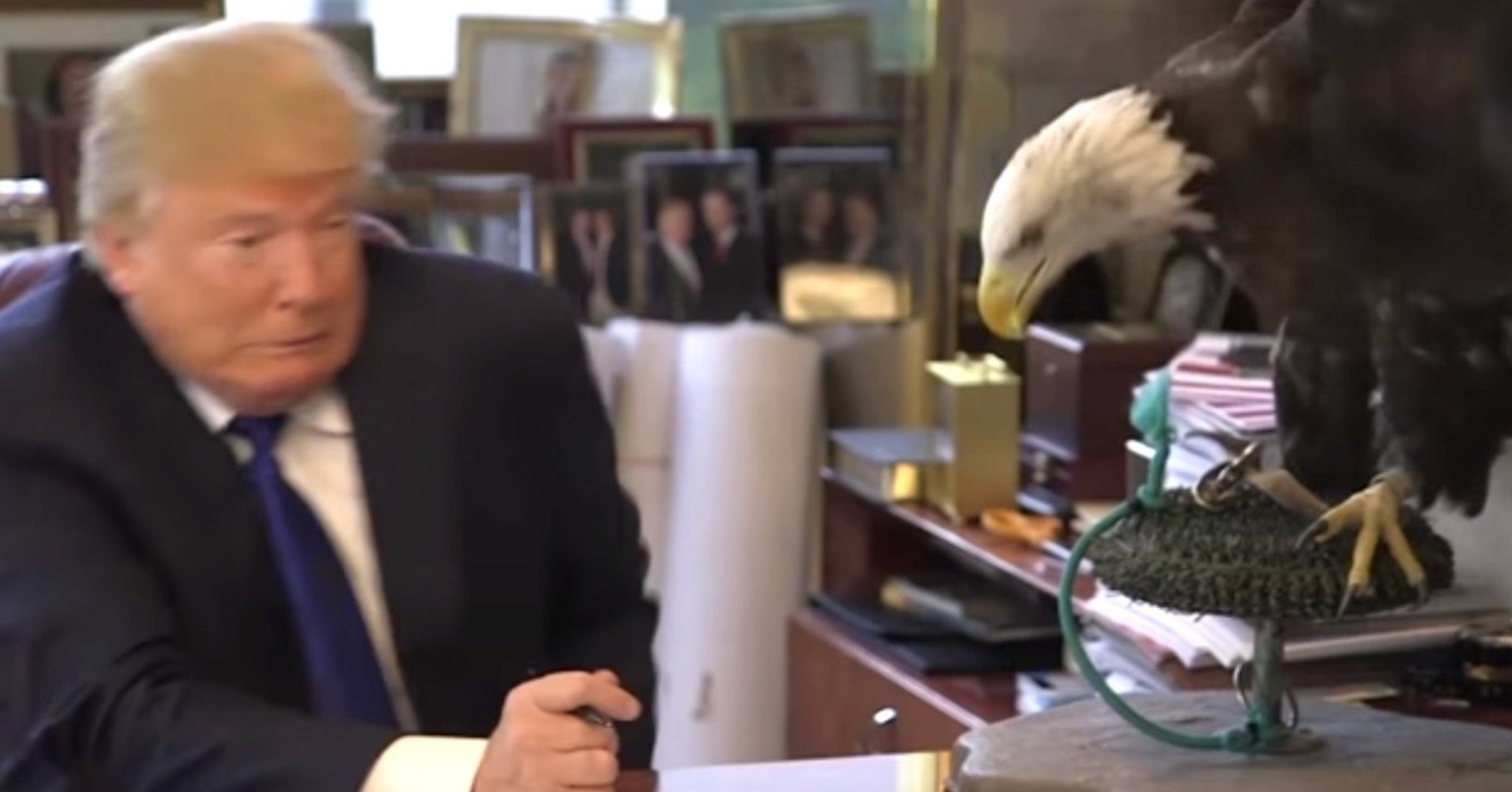 donald trump scared of eagle