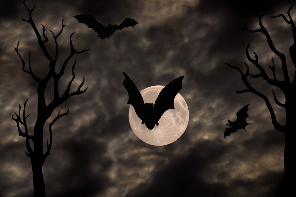 halloween party bats hit