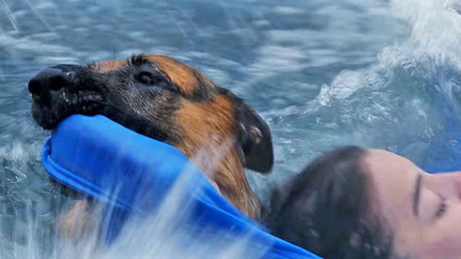 a dogs purpose vindicated in fight with peta animal abuse