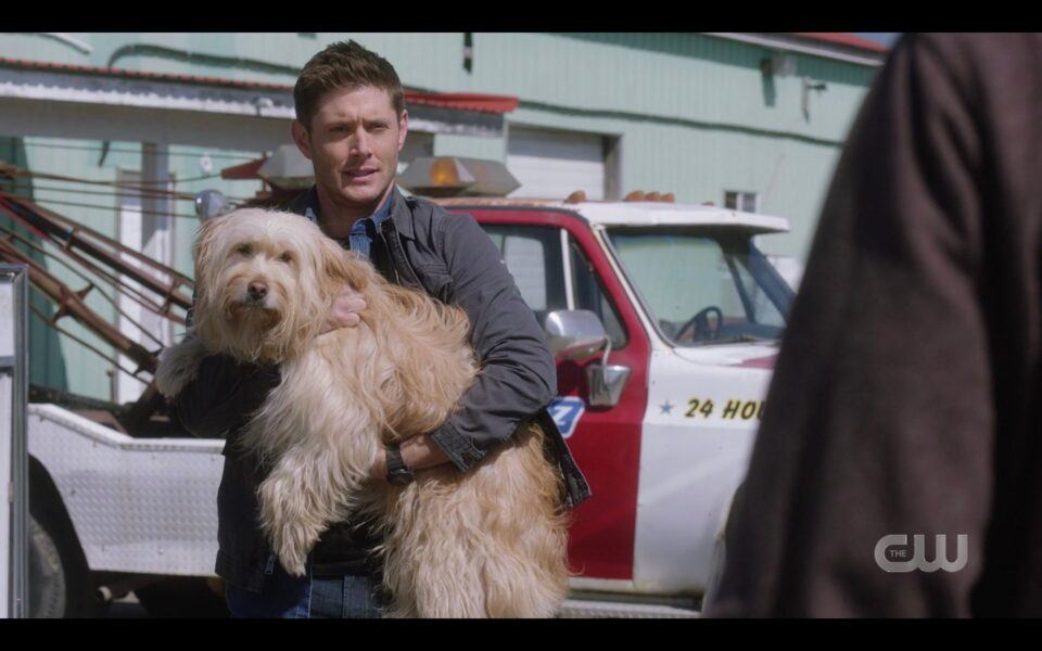 SPN Dean Winchester holding big shaggy dog Miracle 1519