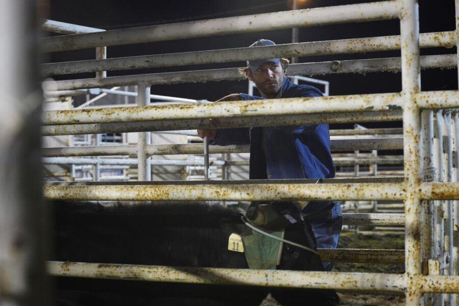 Walker as Duke on rodeo bull circuit 105