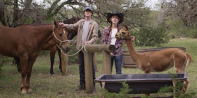 Walker Augie and Stella playing with horses and llama.