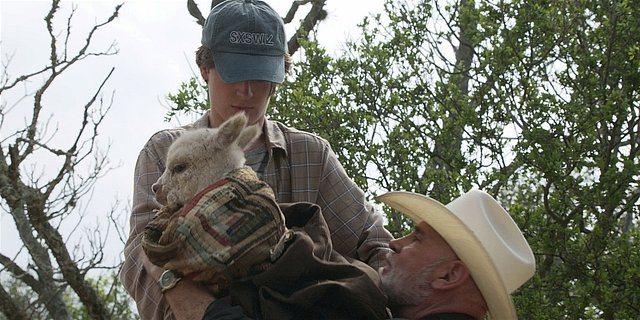 Walker baby llama put into Bonhams arms.